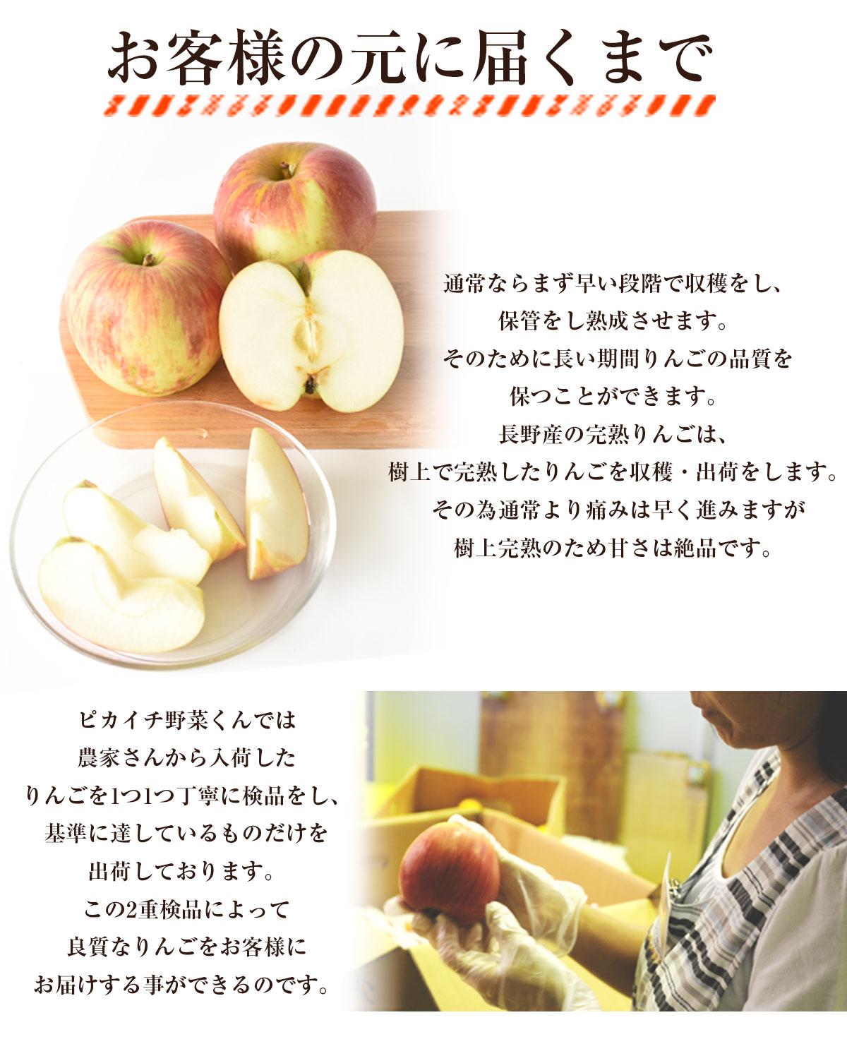 長野県産 りんご 5kg 【特別栽培農産物】【国産】【訳あり】