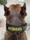 GOODBLESS Nylon Collar PITMANIA【PMC00087】