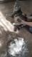 グルーミングブラシ Lサイズ【PMAA0005】