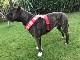 Fleece Harness soupblack【PMC00087】