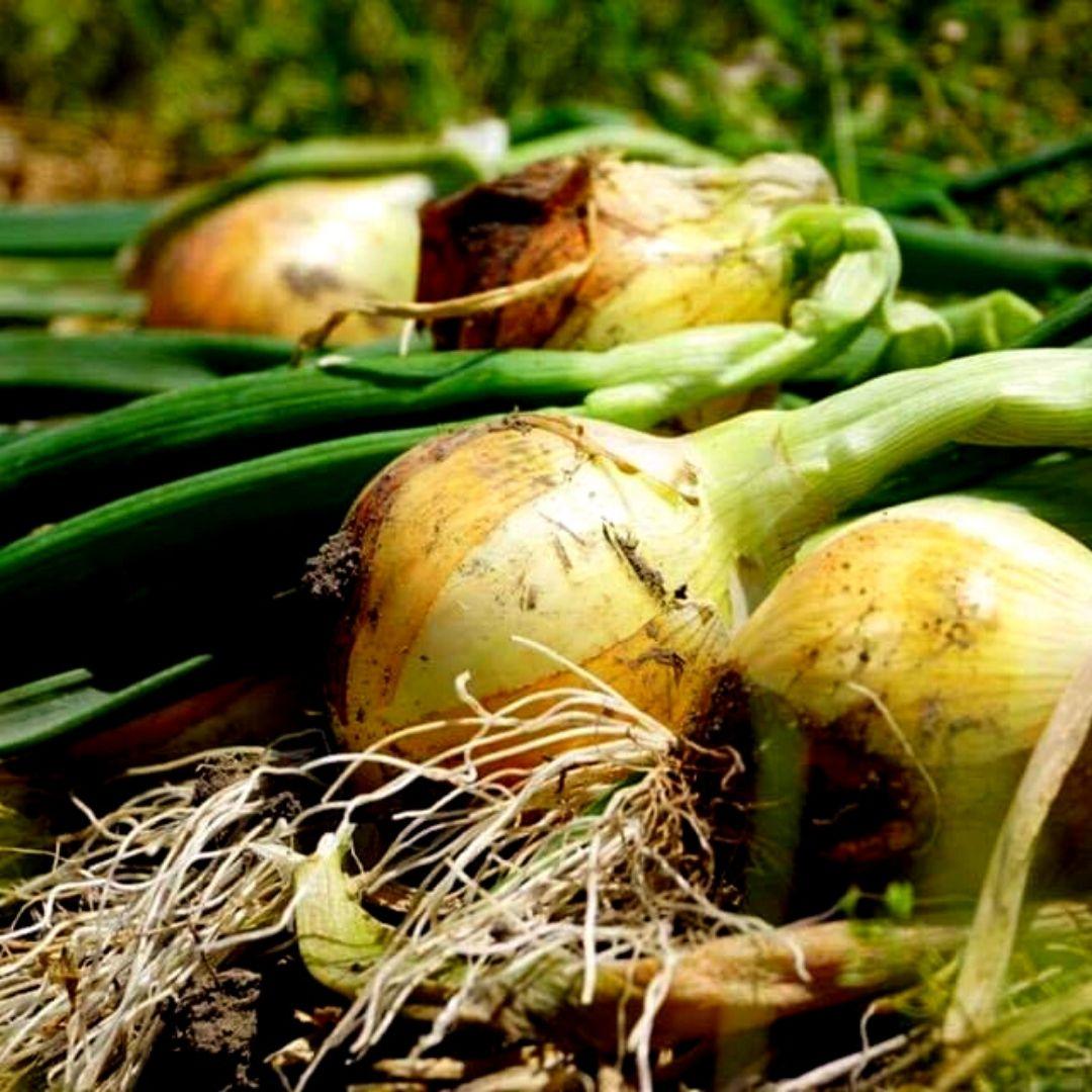【産地直送】良農園 季節の野菜セット