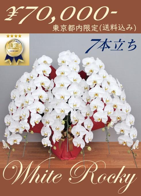 ホワイトロッキー7本立 大輪胡蝶蘭 【都内配送限定:別格胡蝶蘭】 ラッピング付き TS-04