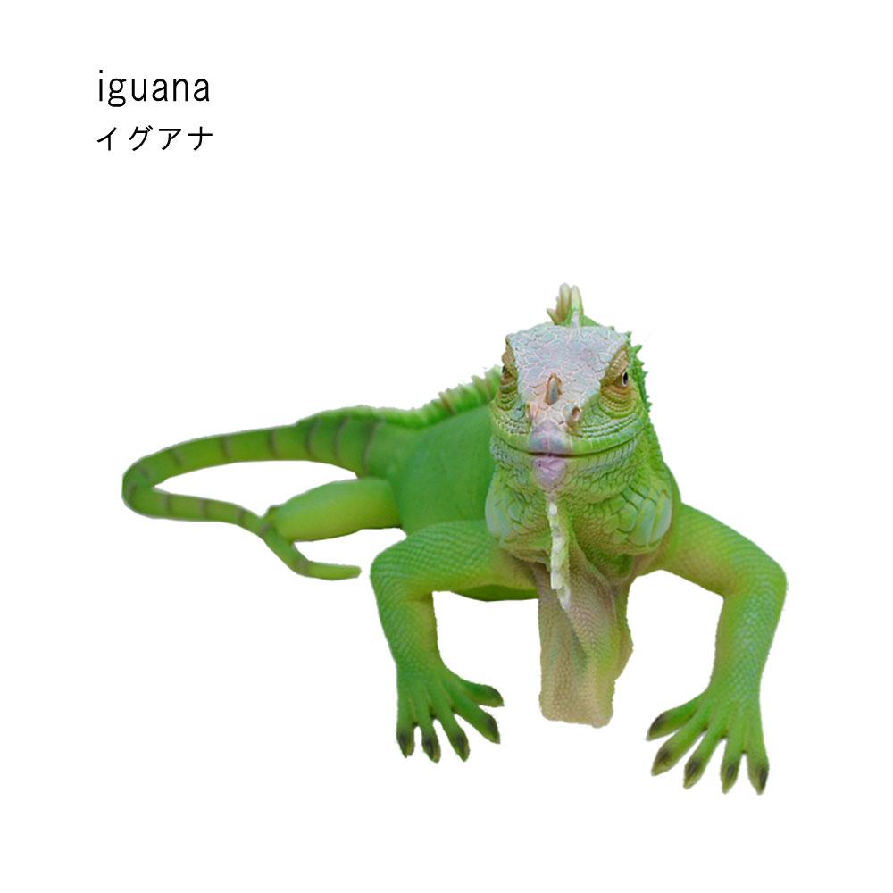 イグアナ トカゲ 緑 リアル 置物 オブジェ ガーデニング