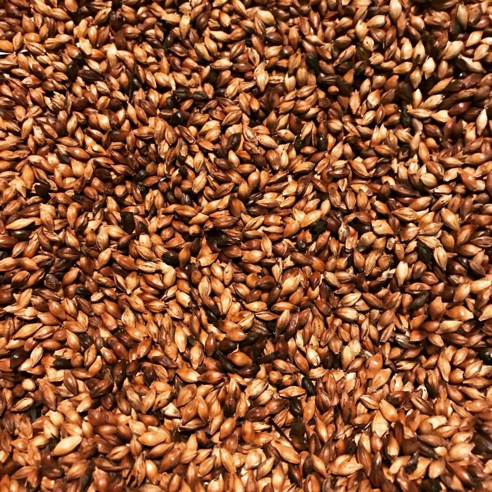 無農薬・無肥料で育てられた!国産自然栽培麦茶丸粒 1袋 200g 【ネコポス不可】