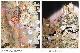 大きいサイズ 留袖レンタル 桂由美 th034 16点フルセット 黒留袖 結婚式 母親 親族 留め袖 着物レンタル 正絹 高級留袖 本金箔 貸衣装 広巾 幅広 LLサイズ 大きめ 13号〜19号 人気 Yumikatsura 「鼓譜の美」 往復送料無料