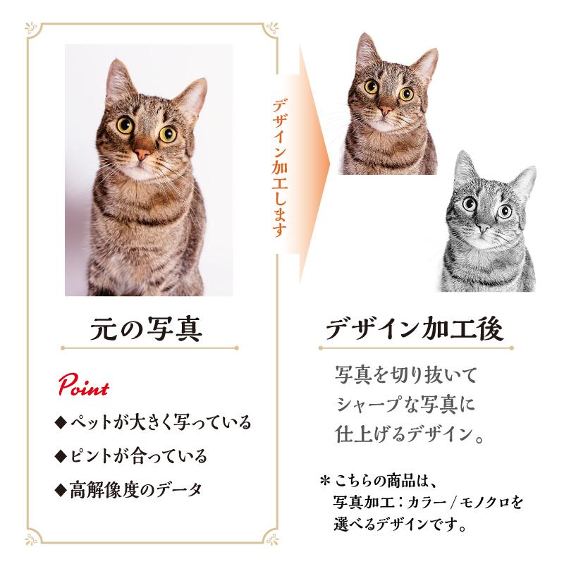 うちCafeマグM Message-A