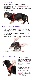 バディベルト 3.5号 ラグジュアリー シボタイプ カナリア 【犬用ハーネス】