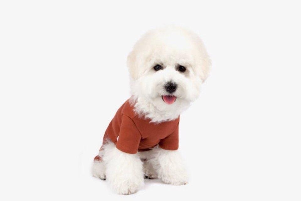 ペコポコドッグ オールインワン 【犬用 ロンパース】