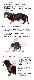 バディベルト 7号 ラグジュアリー シボタイプ スワロフスキー3色 【犬用ハーネス】