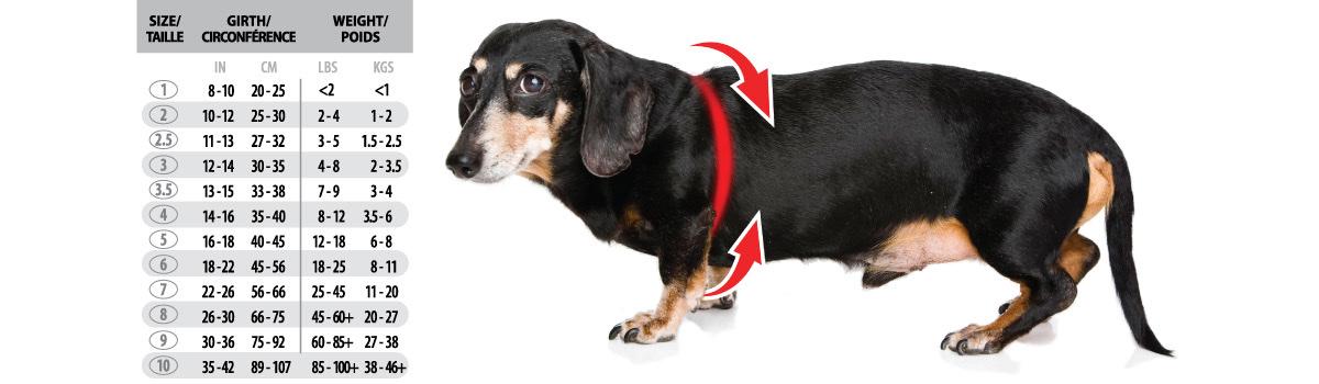 バディベルト 8号 ラグジュアリー シボタイプ スワロフスキー 3色 【犬用ハーネス】