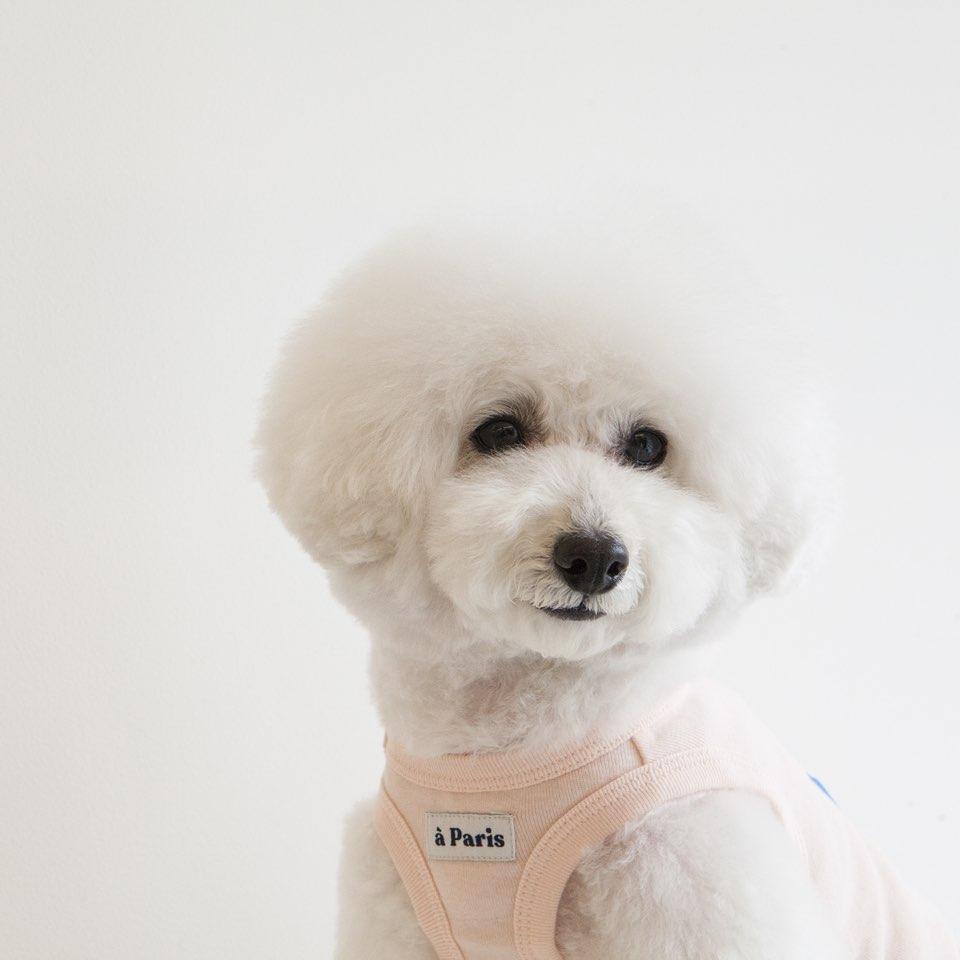 パリ タンクトップ 3色 【犬用タンクトップ】