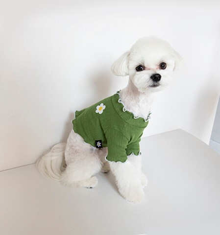デイジーシリーズ レタス クロップ トップス 3色 【犬用Tシャツ】