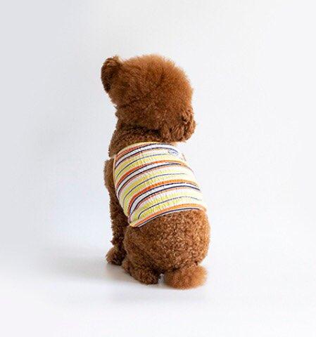 クリンクル クロップ トップ 3色 【犬用 キャミソール】