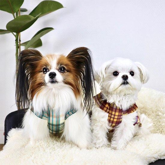 シフォン プレッド ドレス 2色 【犬用 ワンピース】
