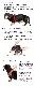 バディベルト 2 号 ラグジュアリー  シボタイプ スワロフスキー ムーンウォーク 【犬用ハーネス】