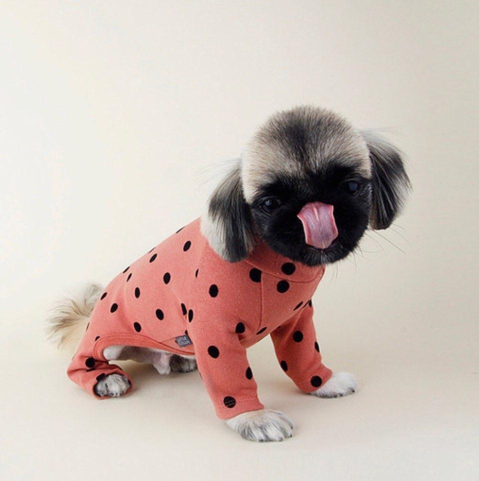 フロッキング ドット オールインワン 7色 【犬用 ロンパース】