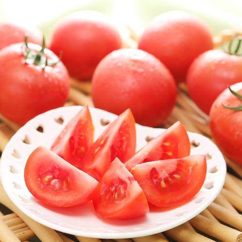 フルーツトマト はるかエイト約800g(発送時期7月中旬〜8月中旬)