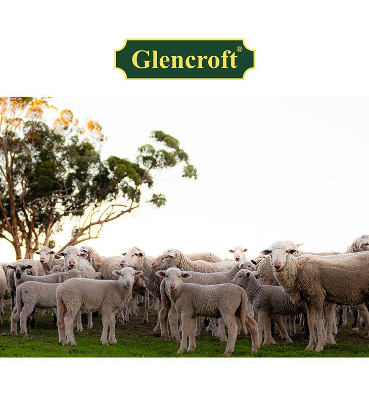 【期間限定!クーポンで10%OFF】GLENCROFT(グレンクロフト) ワンサイズ ウール インソール / 中敷き / ラテックス / メンズ / レディース / イギリス製 / ONESIZE WOOL INSOLES