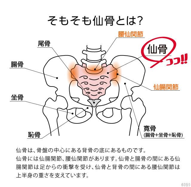 コシレッチ ゆらゆらストレッチ 仙骨まわりの筋肉をほぐす