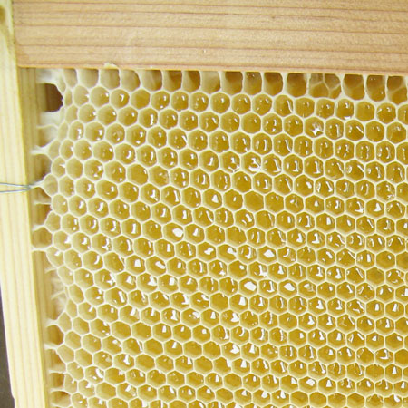 【数量限定】秋田県産アカシヤ蜂蜜1kg(詰め替え容器付き)