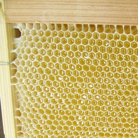 【数量限定】秋田県産アカシヤ蜂蜜180g