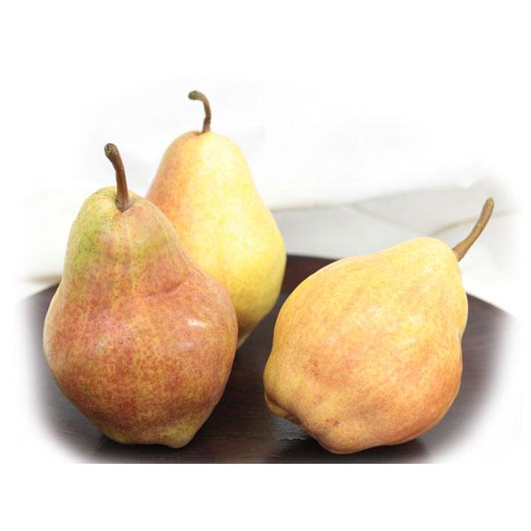 秋田育ち香る洋梨のコンフィチュール
