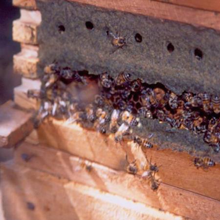 レッドプロポリス&蜂蜜 レッドプロックス
