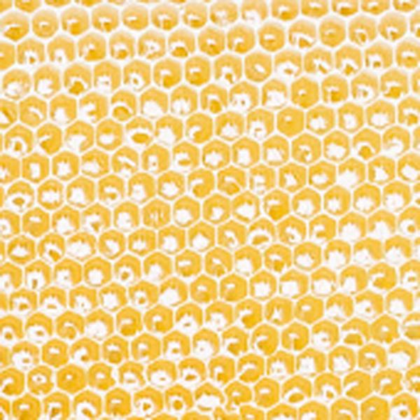 ミャンマー産ヒマワリ蜂蜜300g