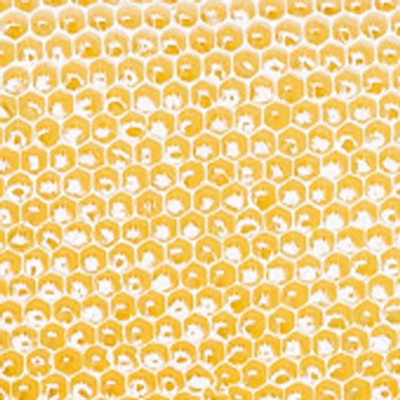 【9/30までキャンペーン!】ハンガリー産アカシヤ蜂蜜2.4kg(小分け用ボトル付)
