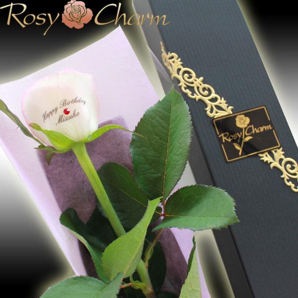 1輪のバラ メッセージローズ ホワイトピンク(生花)