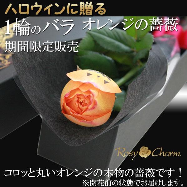 ハロウィンに贈るオレンジのバラ1本(生花)