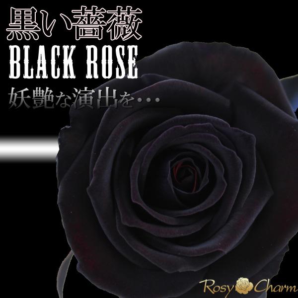黒い薔薇 1輪のバラ ギフト【ブラックローズ】(生花)