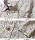 プレミアム フレンチリネン パナマ織り レギュラーカラー 7分袖 シャツ