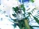 PA00099F Paul Jensen Radiant Heart Crystal 高品質アンダラクリスタル、モルダバイト