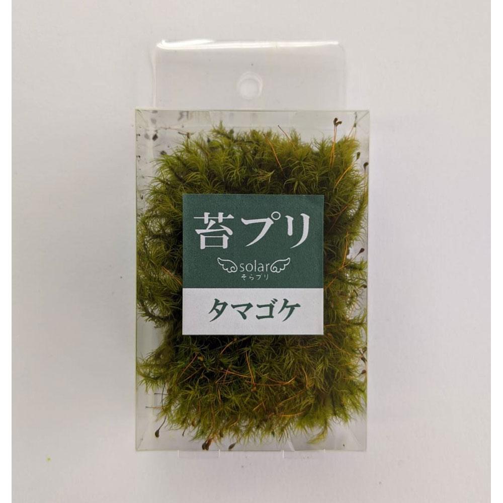 苔プリ タマゴケ モスグリーン S :そらーる ノンスケール kp026