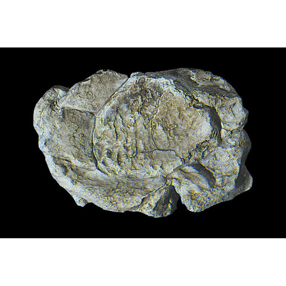 ロックモールド(岩の型) 露出部 :ウッドランド 素材 ノンスケール C1237