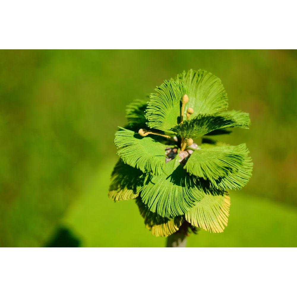 【模型】 47.ワシントンヤシMH ピンタイプ 215mm :グリーンアート 完成品 1/43 1010-P