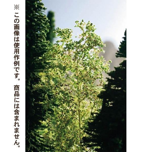 葉表現素材 パウダーリーフ ライトグリーン色 50g :ノッホ 素材 ノンスケール 7142