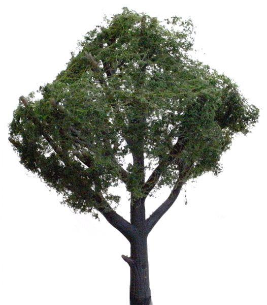 広葉樹 7.6〜10.1cm 3本 :ウッドランド 完成品 ノンスケール 3508