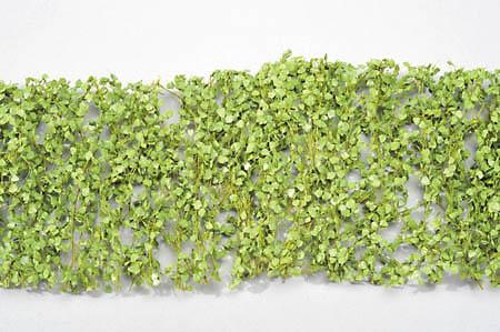 ポプラの枝葉(1:45+)-新緑 :ミニネイチャー 素材 ノンスケール 913-31