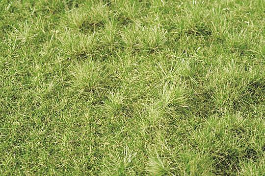 茂みのある牧草地 秋の訪れ :ミニネイチャー 素材 ノンスケール 713-23