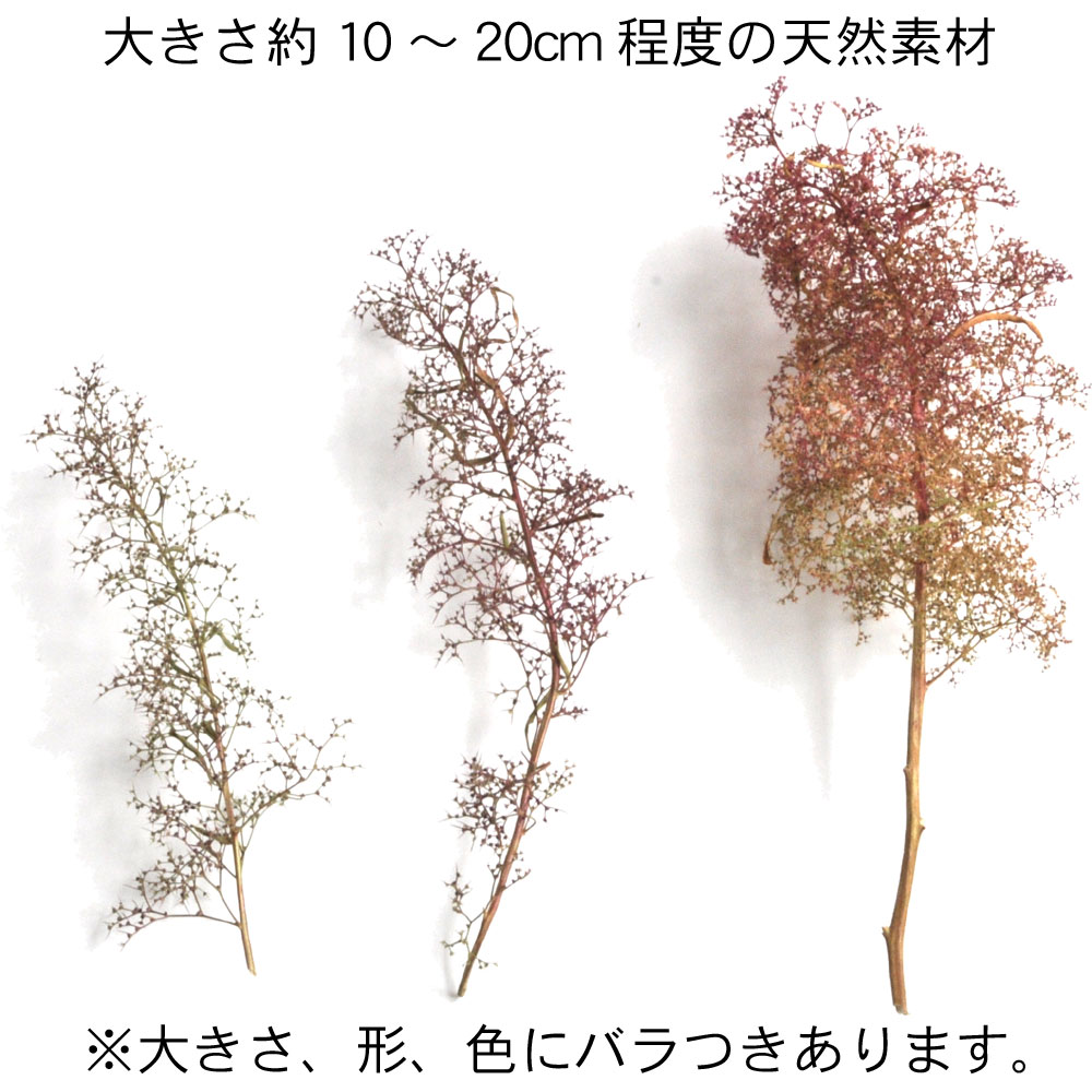 オランダドライフラワー(スーパーツリー Super Trees) 少量パック :さかつう キット ノンスケール 1214