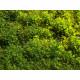 剥離タイプ(芝 パウダー付き) 春 全高2mm :マルティン・ウエルベルク ノンスケール WB-PW221