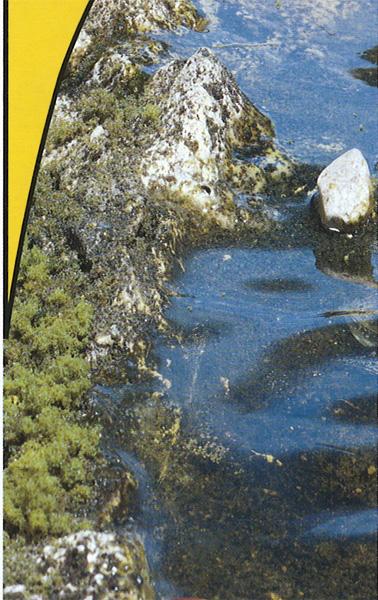 水辺キット(WATER KIT) :ウッドランド 素材 ノンスケール 5153