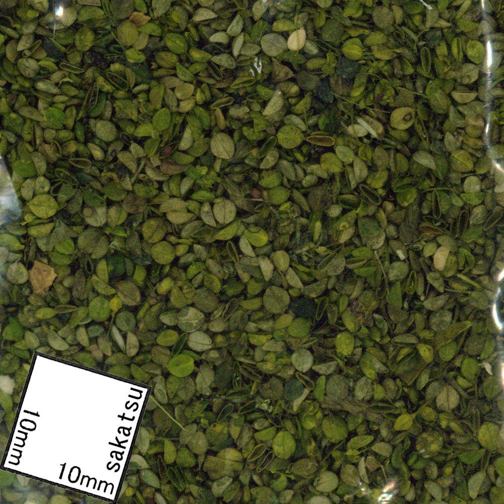 小さい緑の葉 :ジョーフィクス 素材 ノンスケール 116