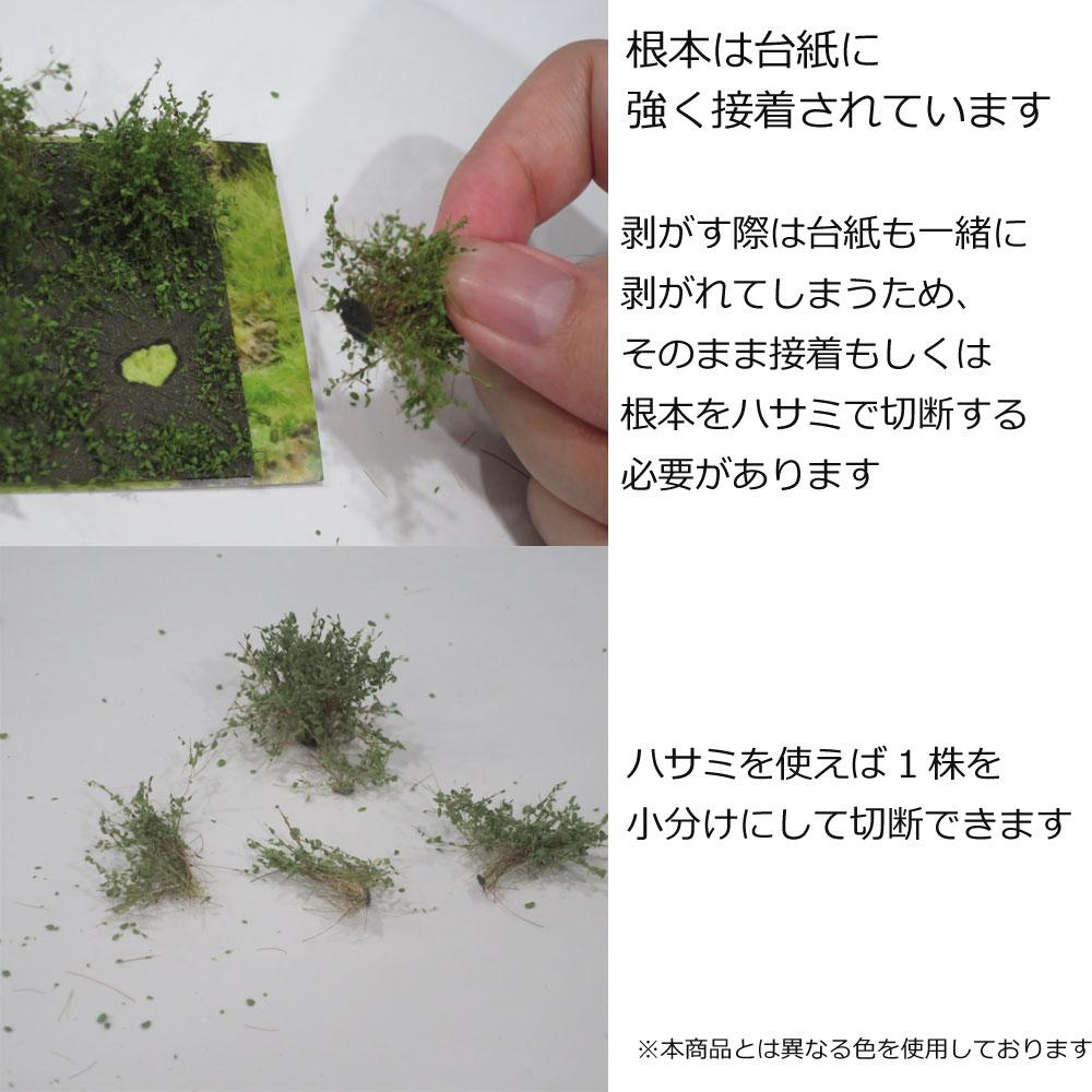 茂みA 株タイプ 全高20mm ミディアムグリーン 10株 :マルティン・ウエルベルク ノンスケール WB-SAMG