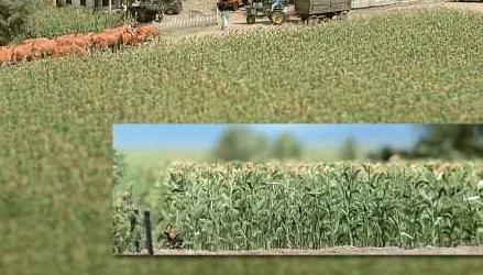 とうもろこし畑のキット :ブッシュ キット HO(1/87) 1202