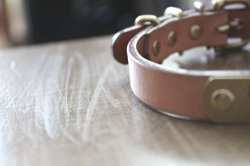 迷子札付首輪 おなまえ首輪 真鍮彫刻プレート付 本ヌメ革/本革 手仕上げ  真鍮金具 首輪(小型犬・中型犬) A88890 (SS〜Lサイズ 3-14kg)