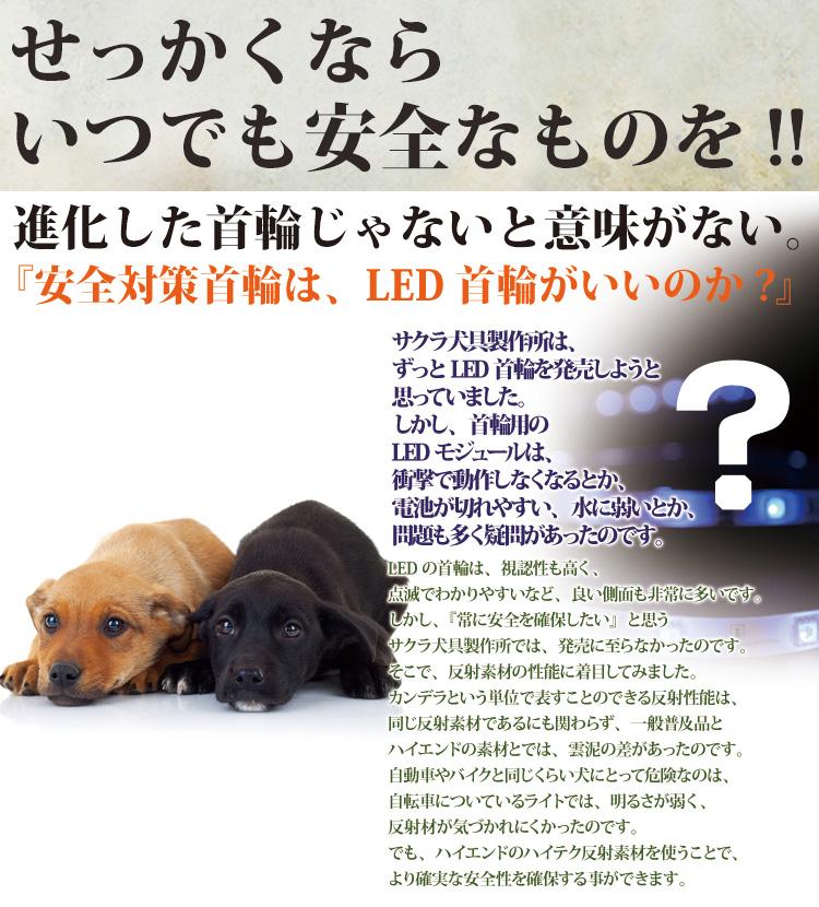 SAKURA DOGWARE マキシリフレクトカラー ヌメ革 光反射首輪(小型犬・超小型犬・中型犬・猫用) A1218