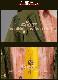 未定事件簿 コスプレ 衣装  Vilhelm 男主人公 水無瀬夏彦 MINASE NATSUHIKO コスチューム cosplay コミケ アニメ 仮装 変装 イベント パーティー y3043